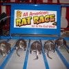 The Great American Rat Race
